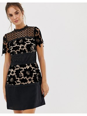 Coast lace shift block dress